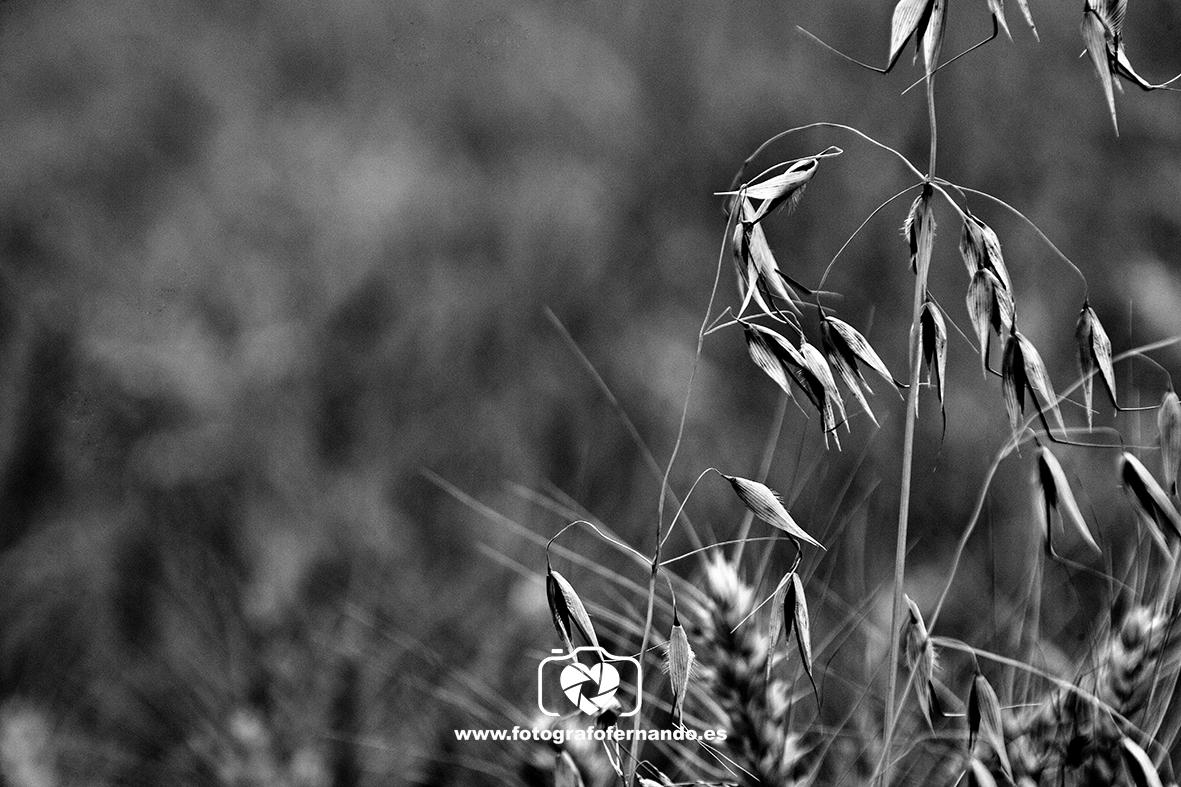 fotografia el ejido roquetas