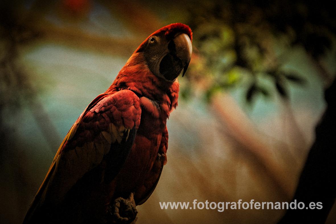 fotografia el ejido animales