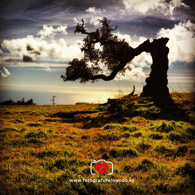 fotógrafo el ejido almeria