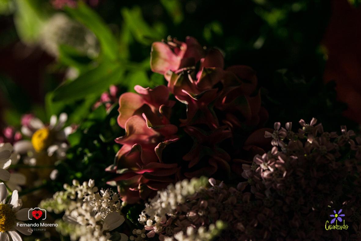 floristerias el ejido almeria