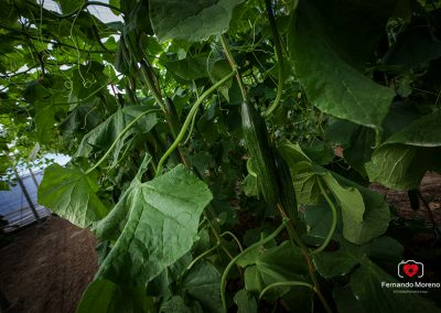 fotografias de hortalizas